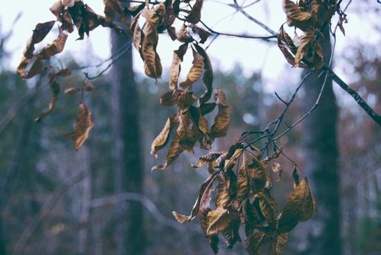animal autumn bird branch color dead dry fall