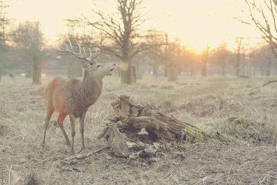 animal autumn bird deer fall field fog forest
