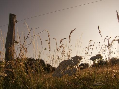 animal autumn bird fall field fog grass landscape