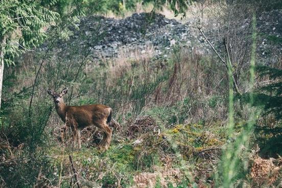 animal autumn bush deer fall forest grass grassland