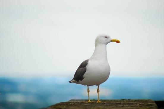 animal aves avian beach beak bird egret feather