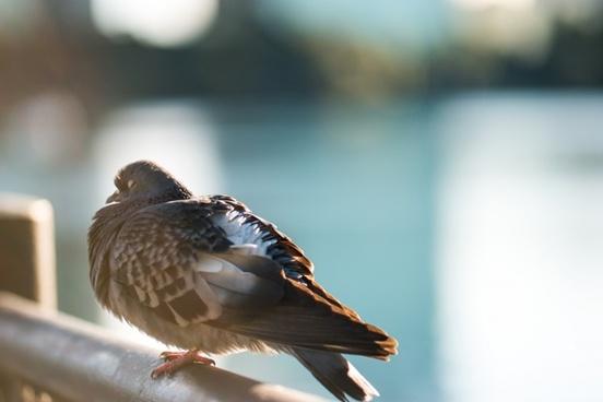 animal aves avian beak bird blur color dof feather