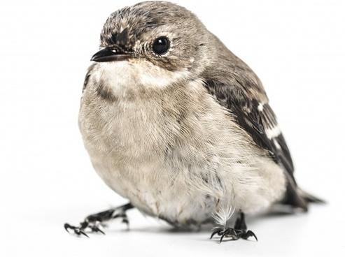 animal aves avian beak bird cute eyes fauna