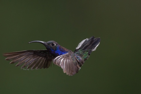 animal aves avian bird bird of prey feather fish