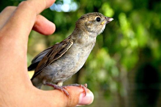 animal avian backyard beak bird branch daytime