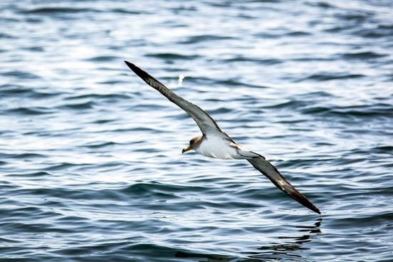animal avian beak bird egret feather flight fly