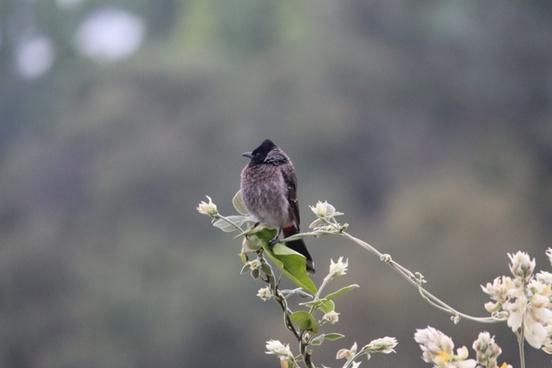 animal avian bird branch feeding finch flight