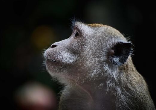 animal baboon cat cute dog eyes face hair head