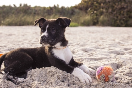 animal baby ball beach canine cat cute dog friends