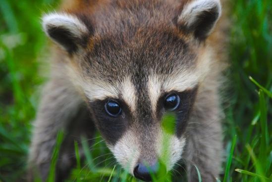 animal baby curiosity cute endangered species eyes