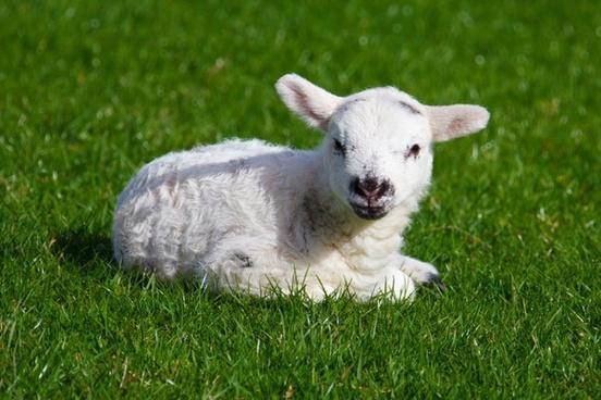 animal baby cute