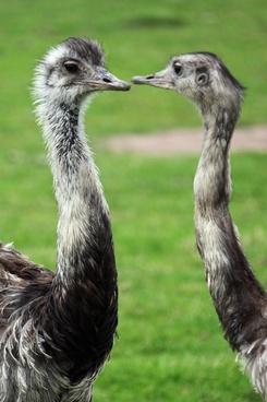 animal background beak