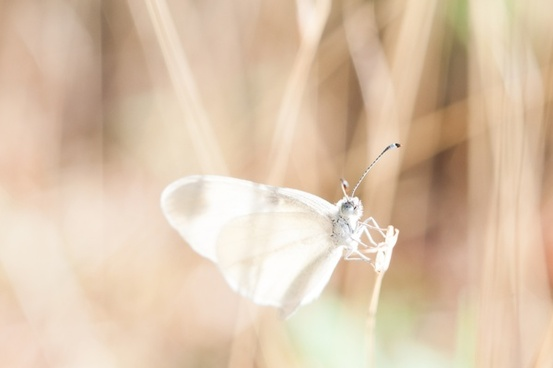 animal background beautiful blur bright butterfly