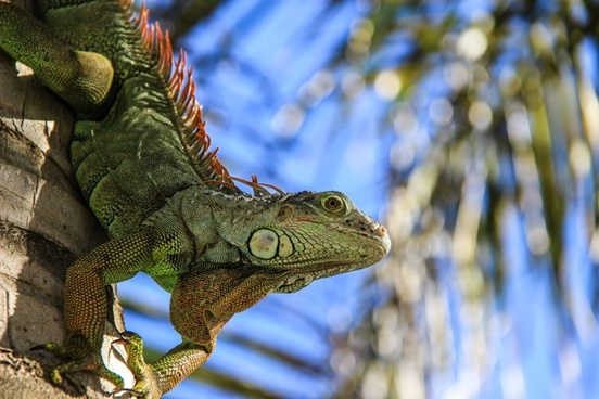 animal background branch camouflage chameleon color