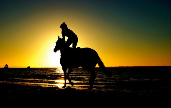 animal backlight backlit beach cowboy dawn dog dusk