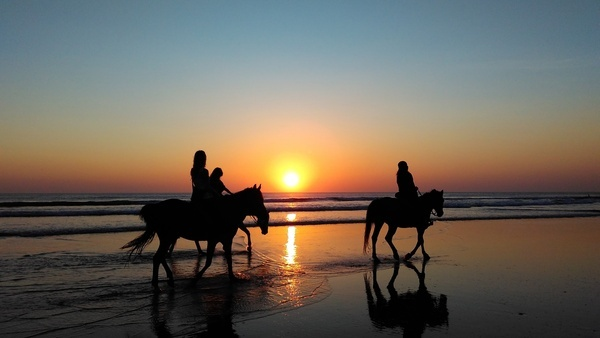 animal backlit beach dawn dusk evening horse