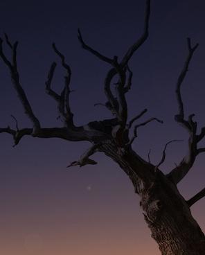 animal backlit bird branch contrast dead eerie