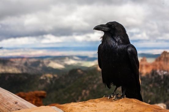 animal beach bird bird of prey daytime desert eagle