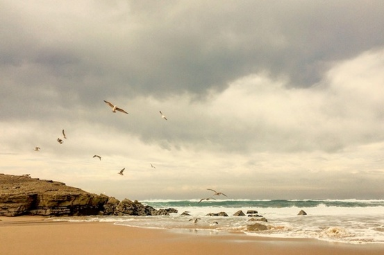 animal beach bird cloud coast coastline daytime