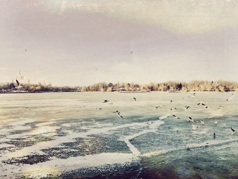 animal beach bird coast cold frozen ice landscape