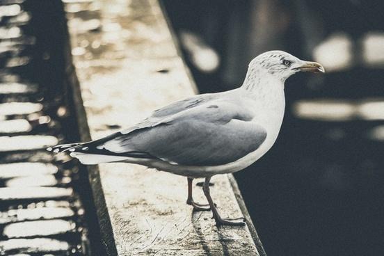 animal beach bird dove feather fly freedom gull