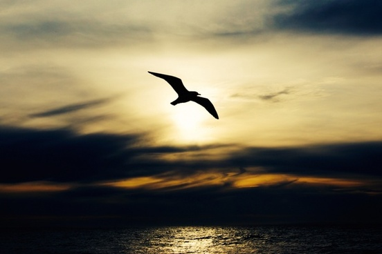 animal beach bird evening flight fly gull heron