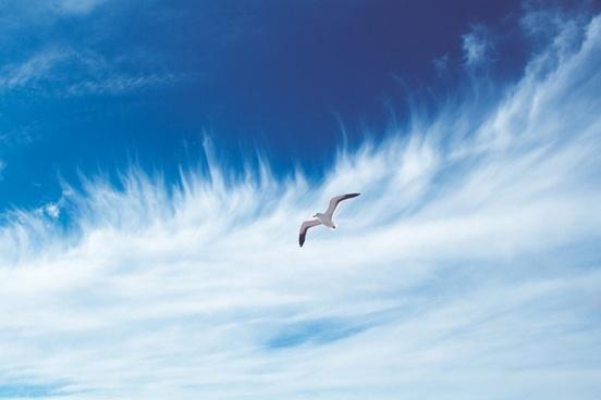 animal beach bird feather flight fly free freedom