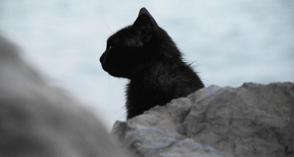 animal beach canine cat cute dog feline mammal