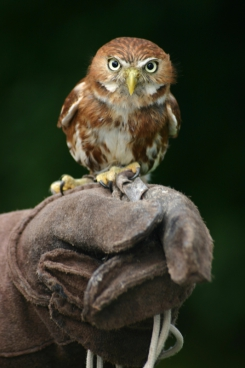 smart owl with big eyes on human hand