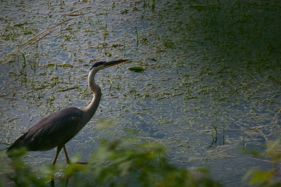 animal beak bird daytime egret everglades fowl