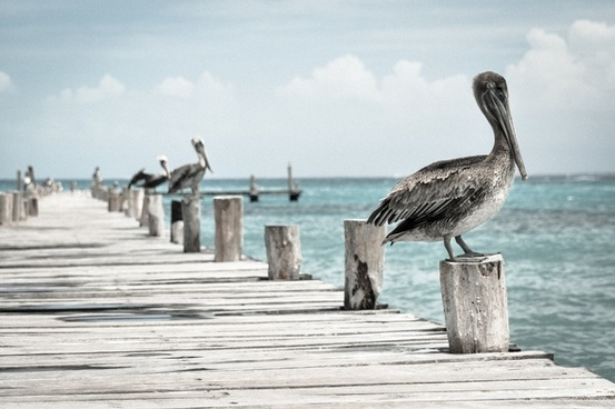 animal beak bird dock feather horizon ocean pier