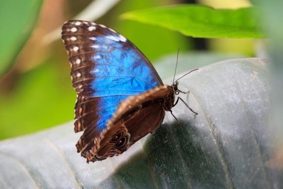 animal beautiful blue