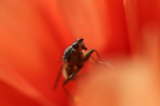 animal bee beetle bug close closeup flower fly