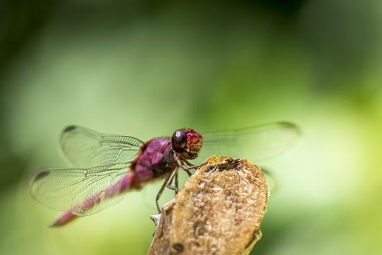 animal beetle bug close closeup detail dragonfly