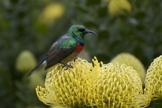 animal biology bird birdwatching blur bright detail