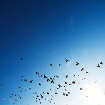 animal bird blue sky christmas flight flock fly