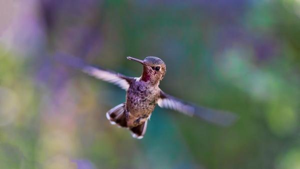 animal bird blur branch daytime environment feeding