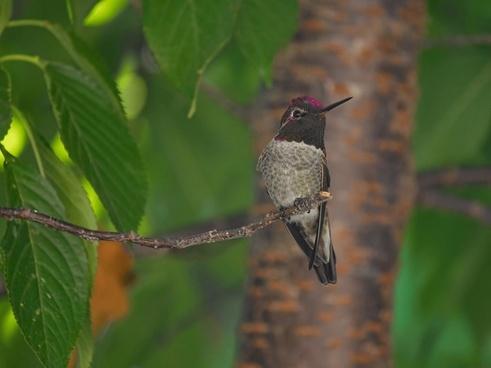 animal bird branch bug dragonfly fauna feeding fly