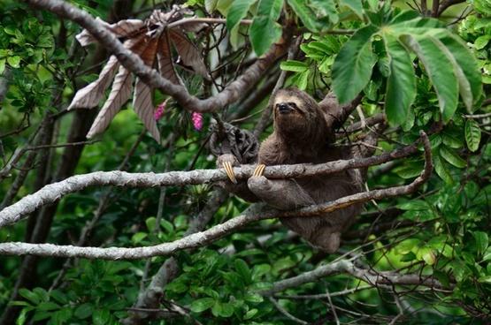 animal bird branch climbing cute forest hanging