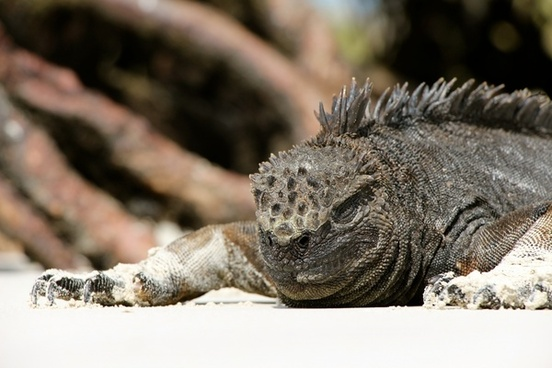 animal bird camouflage chameleon crocodile dragon