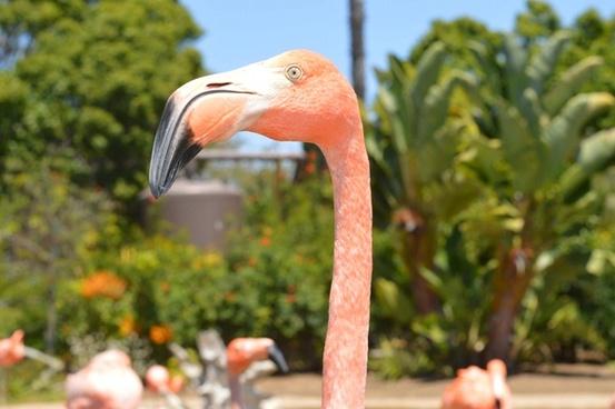 animal bird color daytime exotic feather flamingo