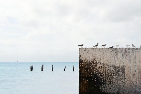 animal bird concrete dock horizon ocean pier sea