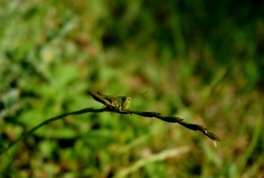 animal blur branch bug dragonfly fly focus forest
