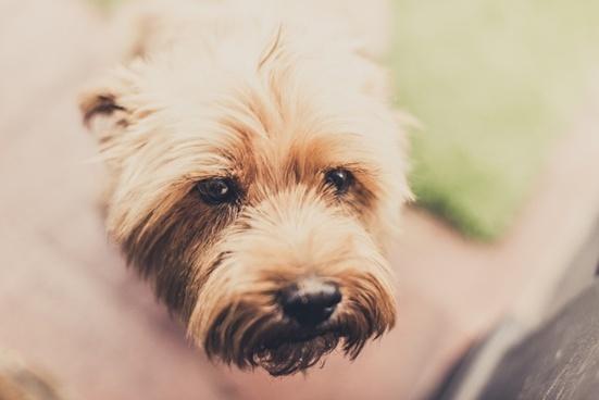 animal blur canine curiosity cute daytime dog