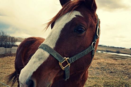 animal bridle equestrian equine farm fence harness
