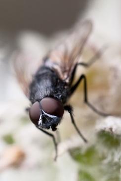 animal brown bug