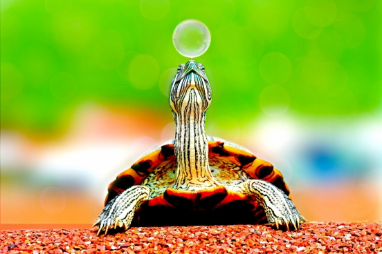 cute tiny turtle playing with bauble