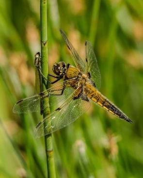 animal bug close closeup cricket damselfly detail
