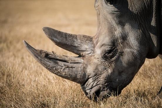 animal bull bush daytime elephant grass grassland