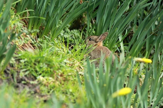 animal bunny cute